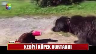Kediyi köpek kurtardı