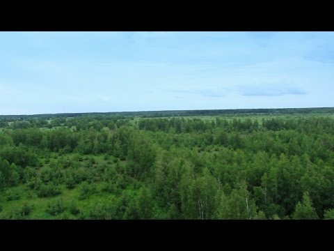 Flight over suburb pine tree forest, fields. Air balloon pov. Stock Footage