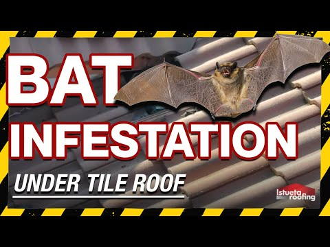 Bat Infestation Under Tile Roof- Roofing Miami, FL- Istueta Roofing