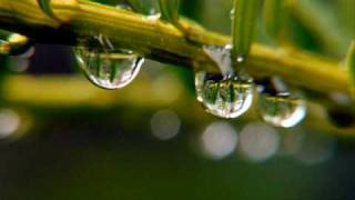 Chopin's Raindrops