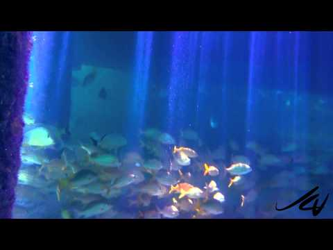 Iberostar Cozumel All Inclusive Resort Snorkeling    Youtube