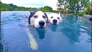 Husky Pool Day