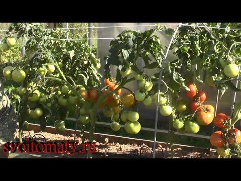 Выращивание помидор (томатов) перцев, баклажанов и других огородных
