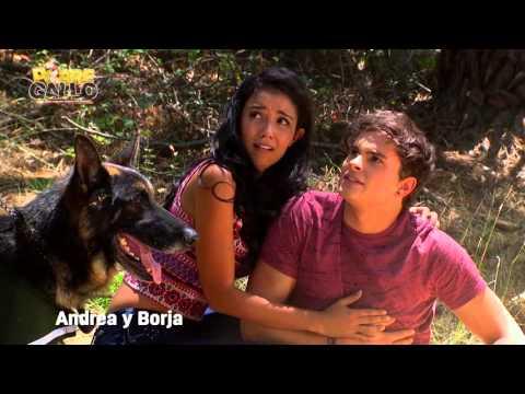 Pobre Gallo - Andrea y Borja Capítulo 52