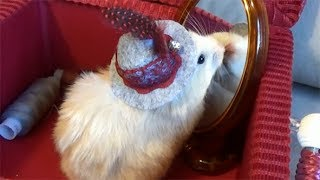 Tiny Hamster Trying on a Cute Hat in front of a Mirror. DIY Hamster Hat
