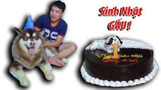 NTN - Sinh Nhật Gấu Alaska Tròn 1 Tuổi ( One year old birthday Alaska )