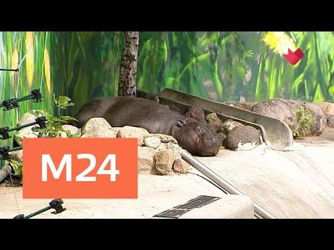 """""""Это наш город"""": зоопарк перейдет на летний график с 1 мая - Москва 24"""