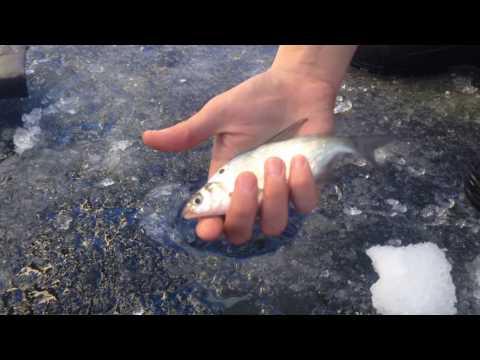 ютуб рыбалка в актобе