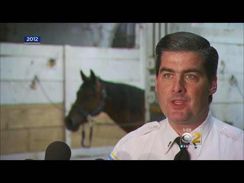 Slain Commander Worked With CPD's Mounted Police
