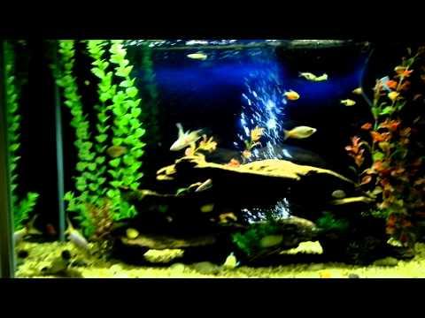 37 gallon tropical fish tank for 37 gallon fish tank
