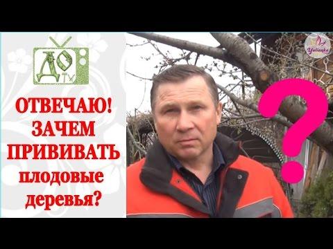 ДЛЯ ЧЕГО нужно ПРИВИВАТЬ плодовые деревья? ОТВЕЧАЮ на вопрос