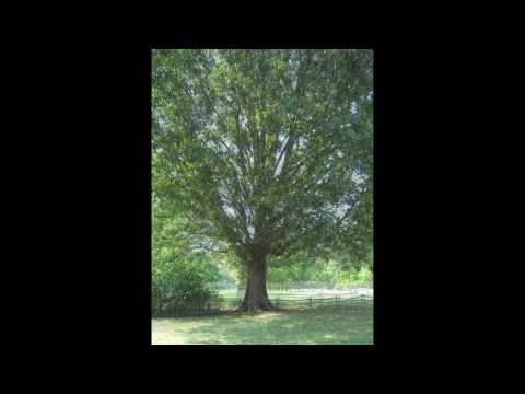 Marc Sloan   The Williamsburg Tree