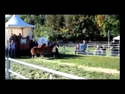 Hay Horse Fair
