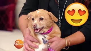 You HAVE to See This Adorable Pup Makeover! | Rachael Ray Show