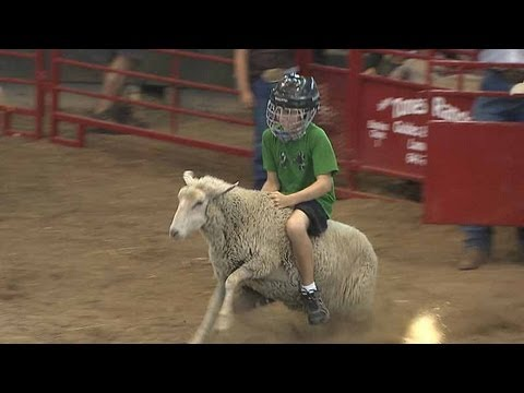 In this wild and fun sheep riding contest, the youngest Fairgoers see how long they can last. 2015 Mutton Busting Video: https://www.youtube.com/watch?v=GVvZ-v1LQ1c 2014 Mutton Busting Video:...