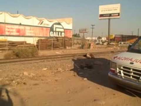Muere migrante arrollado por el tren