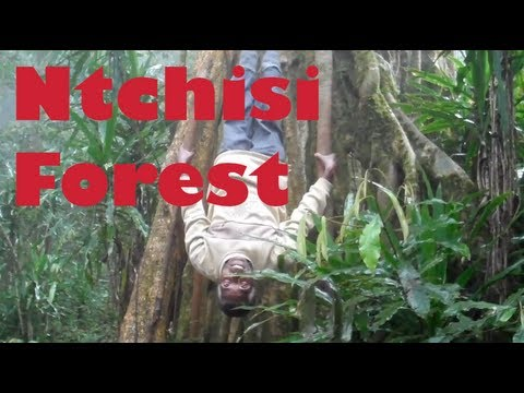 Ntchisi School & Rainforest - Malawi, Africa