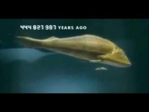 Evoluzione della Specie in 5 minuti