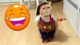 FUNNY ANIMALS AND THEIR OWNERS🐶🚶🐱
