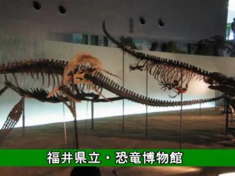 自然科学・「福井県立・恐竜博物館の化石」