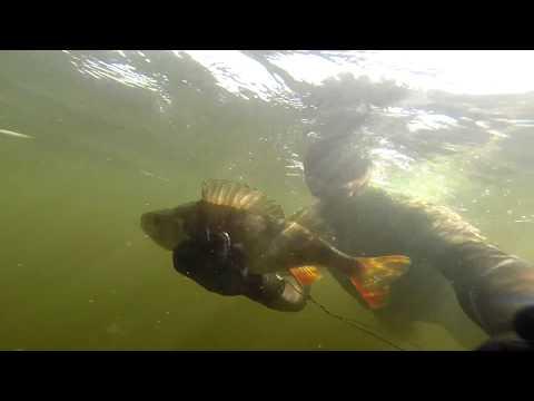 рыбалка в дубовке саратовской области