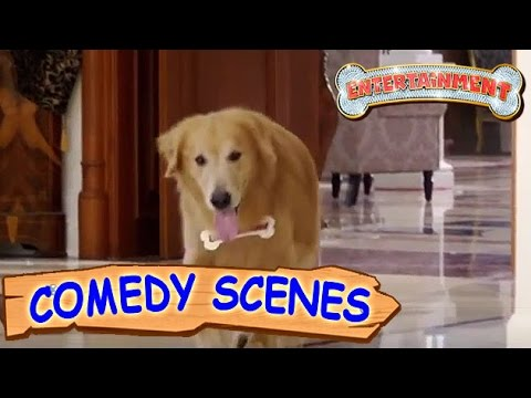 Akshay Kumar Trying To Kill The Dog- Comedy Scenes  Entertainment  Hindi Film