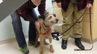Cachorro cego vê os donos pela primeira vez