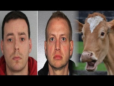 Man Caught Having Sex With Cow hodgetwins video