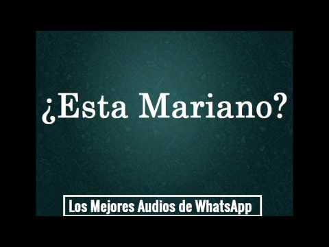 ¿Esta Mariano? - Los Mejores Audios De WhatsApp