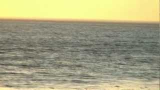 Дельфины. Сукко. 20.06.2012