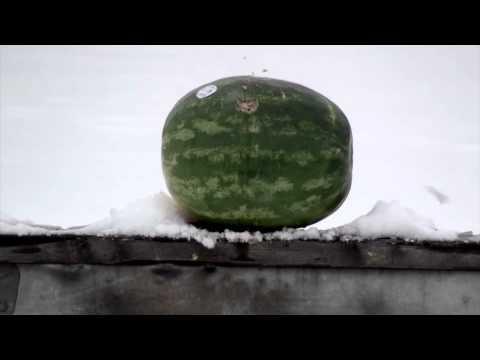 Melons No Match For Benjamin® Rogue™ .357