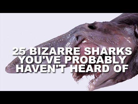 25 Weird Sharks You Never Heard Of