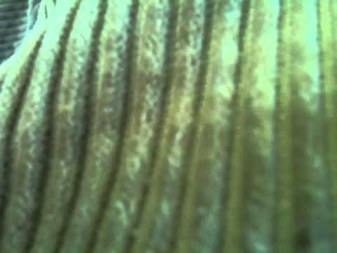 Gordon Koang Duoth video