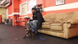 Dog Training | 3 Week Board & Train Drop Off - Blue | Solid K9 Training Dog Training