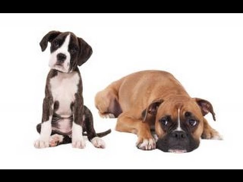 Study PROVES That Your Dog Gets Jealous Of Other Dogs!