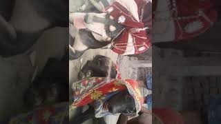 new bhojpuri video 2017 dog comady