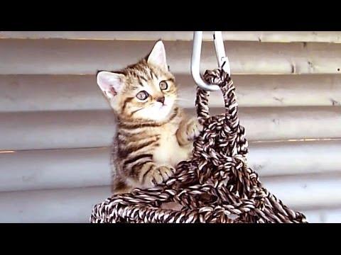 好奇心旺盛な子猫たちは何...