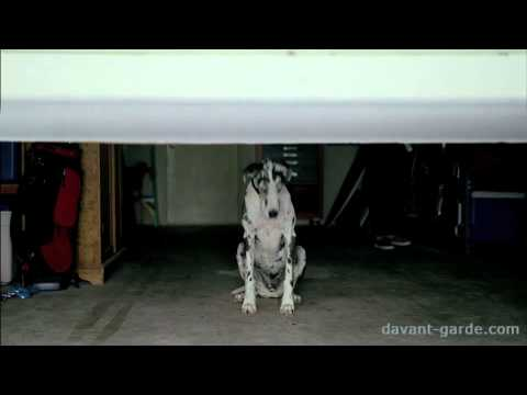 Great Dane (Cruze)