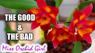 Pros and Cons of growing Cattleya Orchids in a home
