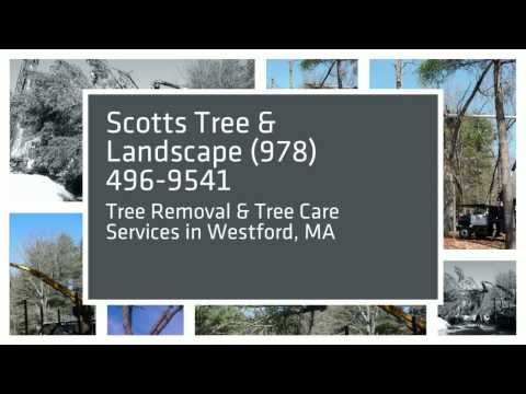 Tree Removal Pruning Westford, MA - Scotts Tree & Landscape, Inc