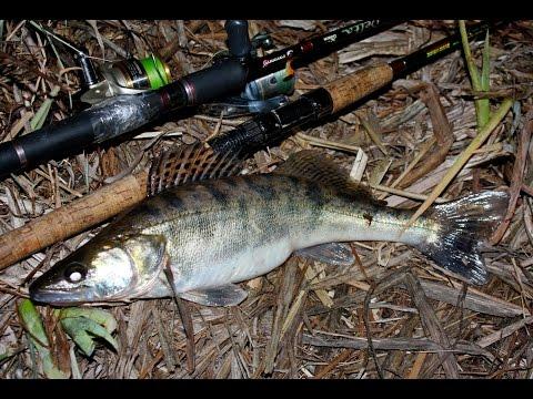 ловли щуки на реке днепр и на что