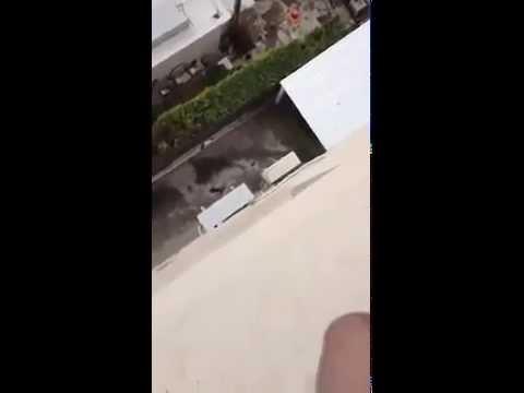 gato cae desde un tercer piso no apto para sencibles