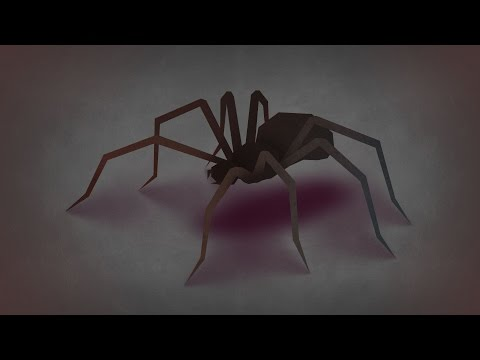 The Eight Spiders