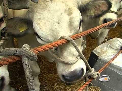Notizie del Giorno Asti 3 Dicembre 2012