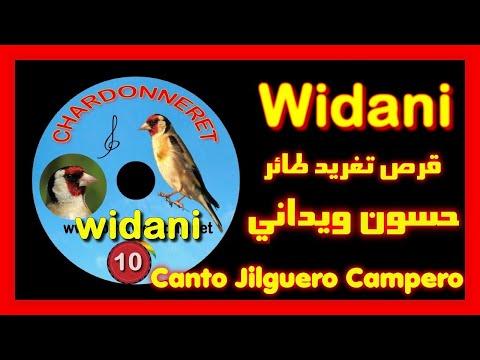 oiseauxspace - cd chant de chardonneret (widani)