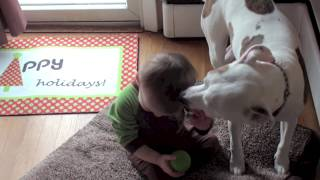 Jameson the Vicious Pitbull. See what a pitbull does to babies!