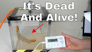 34 Zombie 34 Fly That Is Both Dead And Alive Real Life Schrödinger 39 S Cat Fly Experiment