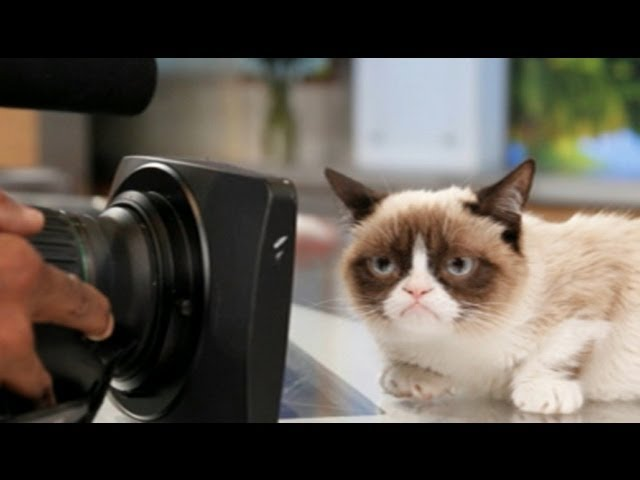 Grumpy Cat Movie In Works After Film Deal; Oprah Winfrey Harvard Commencement Speech