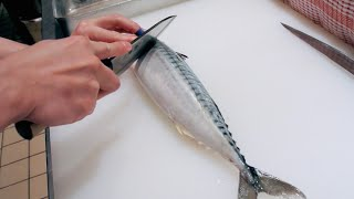 GRAPHIC - How to fillet a fish - Mackerel - Japanese technique - サバのさばき方