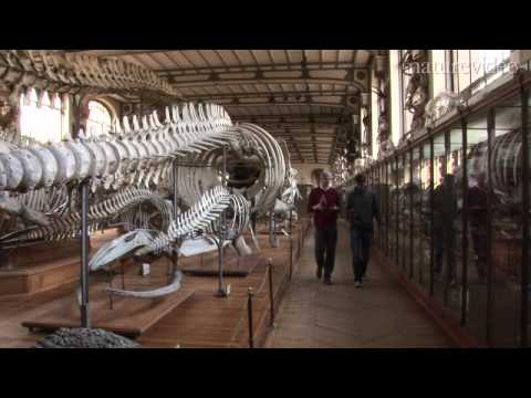The jaws of the Leviathan: by Nature Video